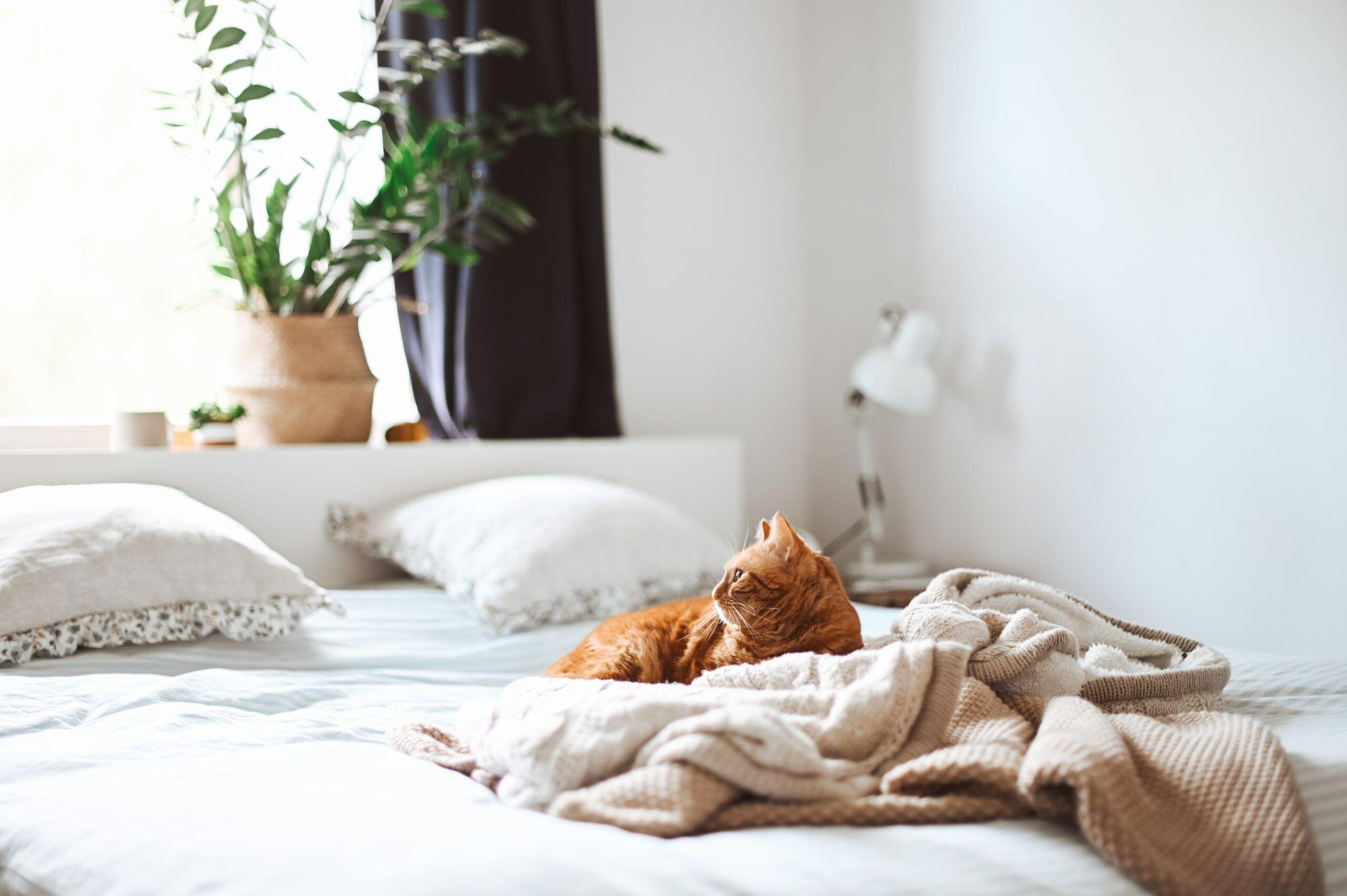 cat-lying-in-bed